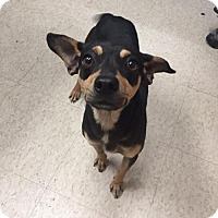 Adopt A Pet :: Mahala-PENDING - Grafton, WI