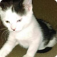 Adopt A Pet :: Clover - Woodbury, NJ