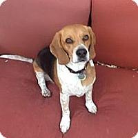 Adopt A Pet :: Kramer - Phoenix, AZ