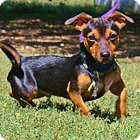 Adopt A Pet :: JJ - Topeka, KS
