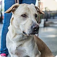 Adopt A Pet :: Ranger - Cumming, GA
