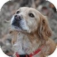 Adopt A Pet :: Tia - Yorktown, VA