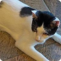 Adopt A Pet :: Birch - Secaucus, NJ