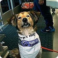 Adopt A Pet :: Diamond - Alderson, WV
