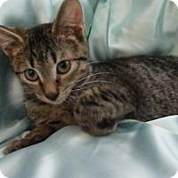 Adopt A Pet :: Skittles - Alexandria, VA