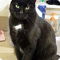 Adopt A Pet :: Moo - Columbia, MD