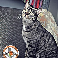 Adopt A Pet :: Fraidy - Oceanside, CA