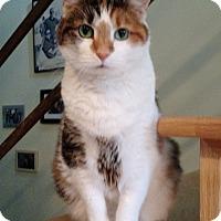 Adopt A Pet :: Dawne - Chicago, IL