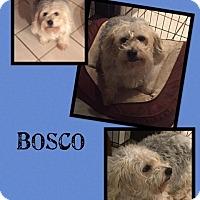 Adopt A Pet :: Bosco - Scottsdale, AZ