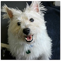 Adopt A Pet :: Gannon - Forked River, NJ