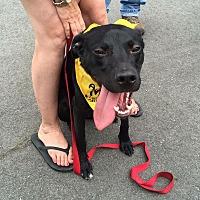 Adopt A Pet :: Duke - Goldsboro, NC