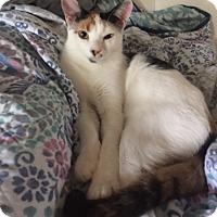 Adopt A Pet :: Kiwi - Houston, TX