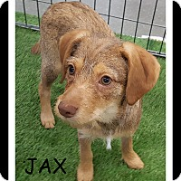 Adopt A Pet :: JAX - Winchester, CA