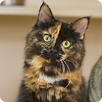 Adopt A Pet :: Taytay - East Hartford, CT
