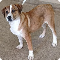 Adopt A Pet :: Posie - Troy, OH