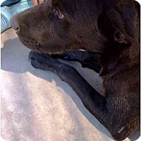 Adopt A Pet :: Lucy - YERINGTON, NV