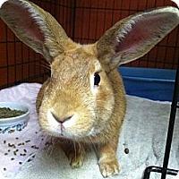 Adopt A Pet :: Marty - Little Rock, AR