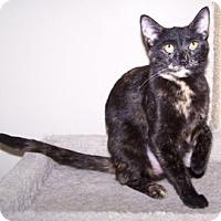 Adopt A Pet :: Precious - Colorado Springs, CO
