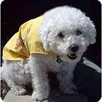 Adopt A Pet :: Herbie - La Costa, CA