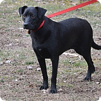 Adopt A Pet :: Herby - Boiling Springs, PA