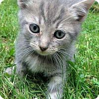 Adopt A Pet :: Fish - Jefferson, NC