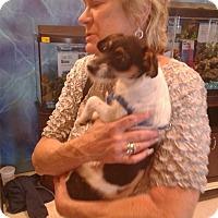 Adopt A Pet :: Mimi - Las Vegas, NV