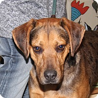 Adopt A Pet :: Barkley (Neutered) - Marietta, OH