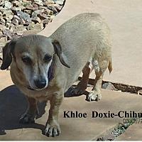 Adopt A Pet :: Khloe - Tucson, AZ