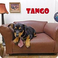 Adopt A Pet :: Tango - Arcadia, FL