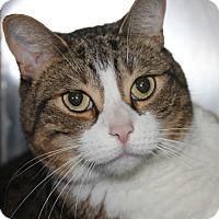 Adopt A Pet :: NICKY - Clayton, NJ