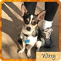 Adopt A Pet :: Witty - Houston, TX