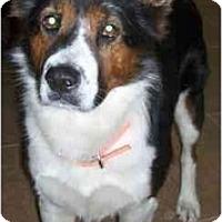 Adopt A Pet :: Kessler - Gilbert, AZ
