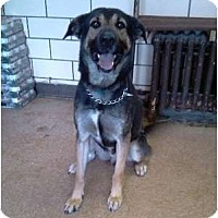 Adopt A Pet :: Rookie - Chicago, IL