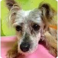 Adopt A Pet :: pierre - pasadena, CA