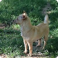 Adopt A Pet :: Juliet - Broomfield, CO