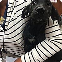 Adopt A Pet :: Toto - Cumming, GA