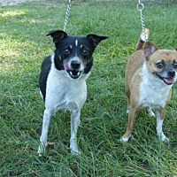 Adopt A Pet :: Teeko and Toby - Conway, SC