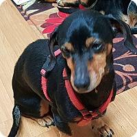Adopt A Pet :: Delia - Andalusia, PA
