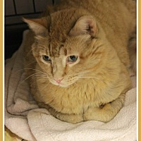 Adopt A Pet :: Max - New Richmond,, WI