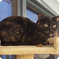 Adopt A Pet :: Autumm - Cody, WY
