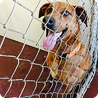 Adopt A Pet :: Marshall - Newburgh, IN