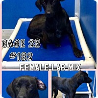 Adopt A Pet :: Cage 23 - Greenville, TX