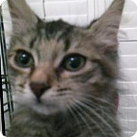 Adopt A Pet :: Buttons - Spring, TX