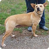 Adopt A Pet :: ELSA - Portland, ME
