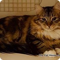 Adopt A Pet :: Chestnut - Parlier, CA