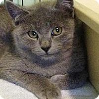 Adopt A Pet :: Bimmer - Monroe, GA