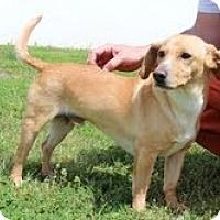Adopt A Pet :: Sheldon - Staunton, VA