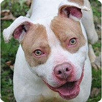 Adopt A Pet :: Pinkie - Chicago, IL