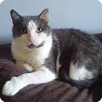 Adopt A Pet :: Henri - Verdun, QC