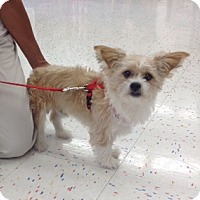 Adopt A Pet :: Crowley - Corona, CA